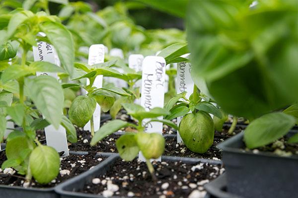 plant starts in soil
