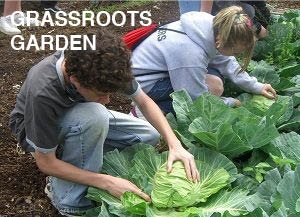 Kids harvesting cabbage. text reads grassroots garden