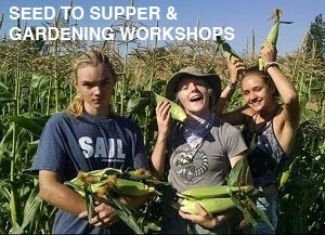 Kids harvesting corn and smiling. text reads seed to supper & gardening workshops.