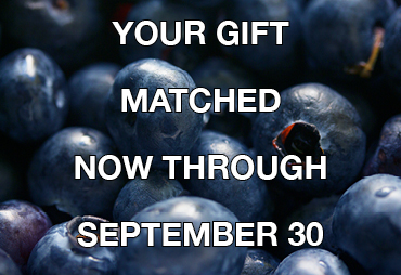 text reads: your gift matched now through september 30. On background of blueberries.